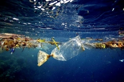 have-you-seen-the-great-pacific-garbage-patch-4